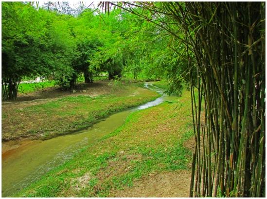 bamboopark01