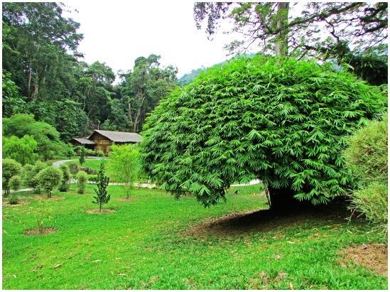 Bambusetum01