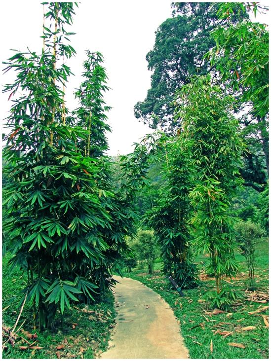Bambusetum03