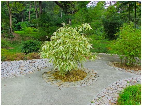 Bambusetum08