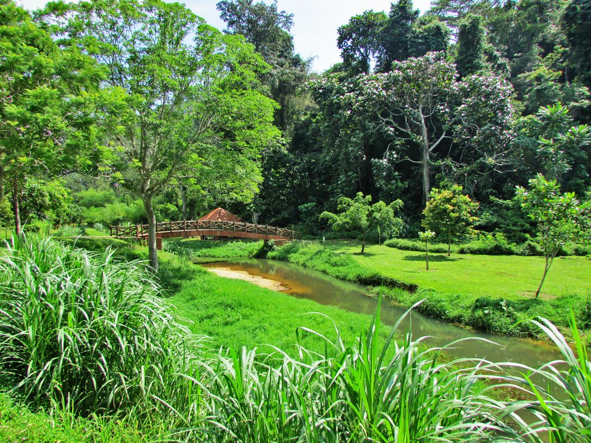 rainforest soil description