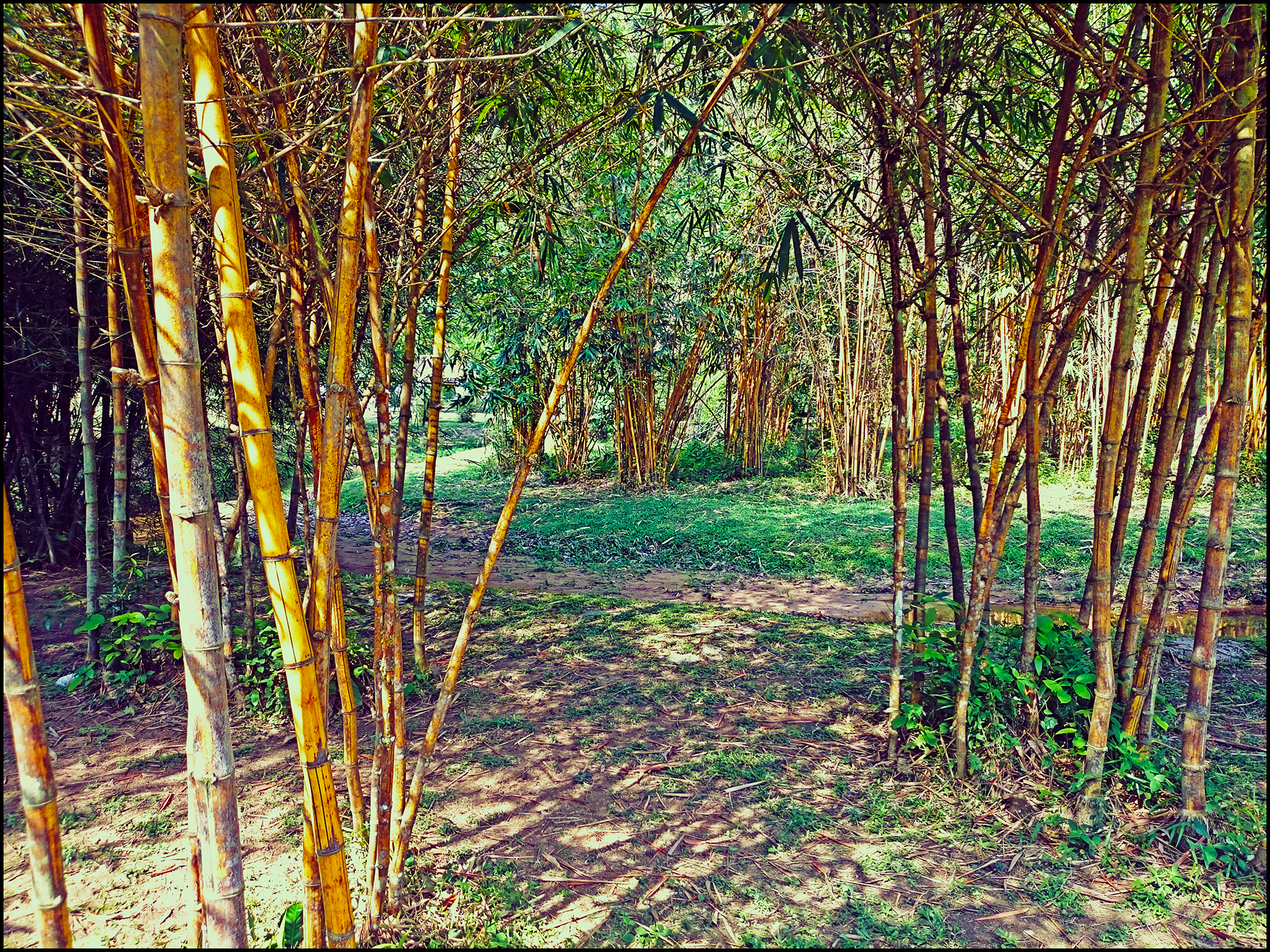 bamboopark09