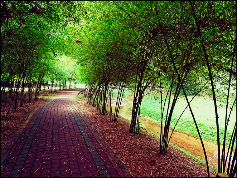 bamboopark05