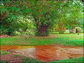 bamboopark11