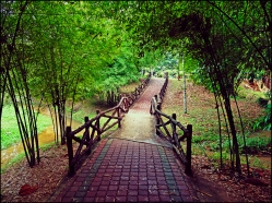 bamboopark13