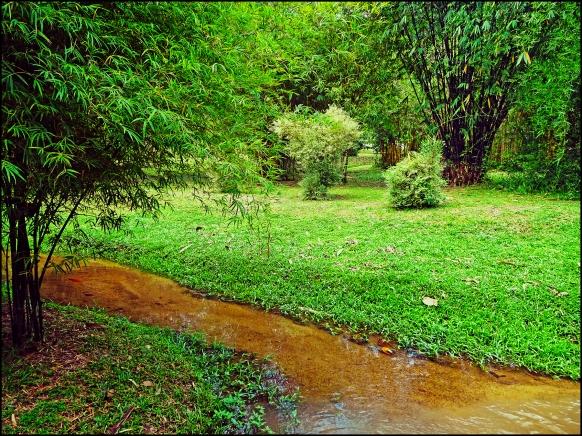 bamboopark14
