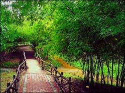 bamboopark15