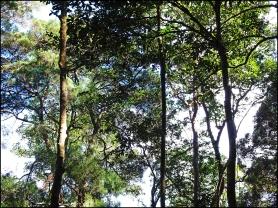 habitat11
