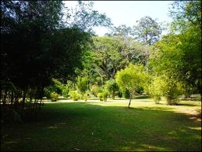 botanical127