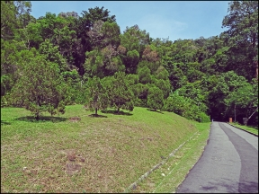 botanical132