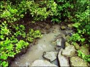 mangrove01
