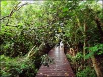 mangrove06