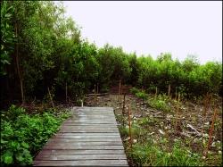 mangrove07