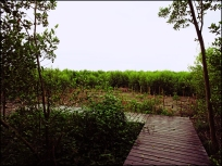 mangrove08