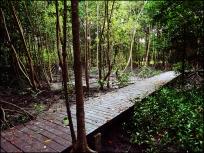 mangrove09