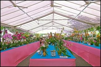 orchidfest01