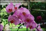 orchidfest02