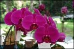 orchidfest03