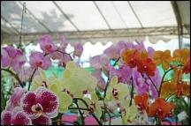 orchidfest04