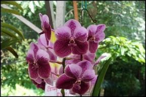 orchidfest06