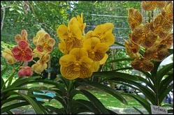 orchidfest07
