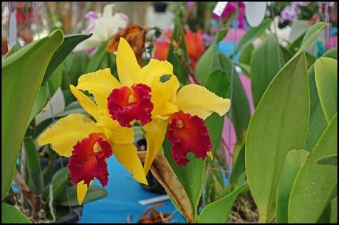 orchidfest08