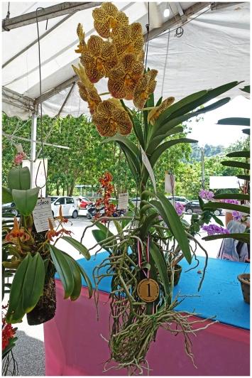 orchidfest09