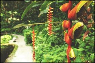 tropicalS01