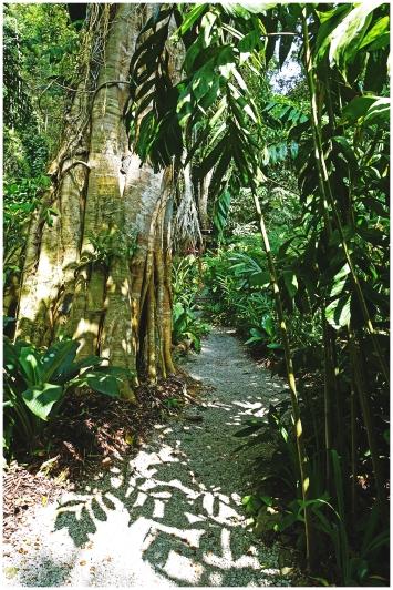 tropicalS08