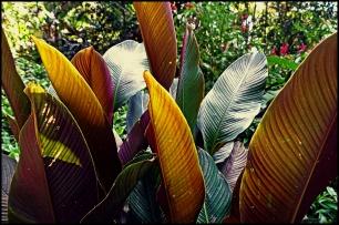 tropicalS11