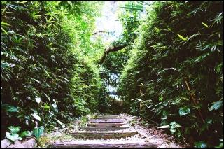 tropicalS15
