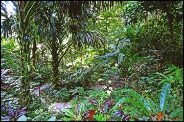 tropicalS19