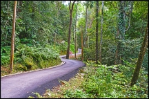 Ayer Itam Hill Road