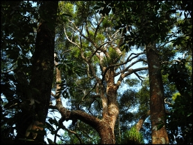 tree13